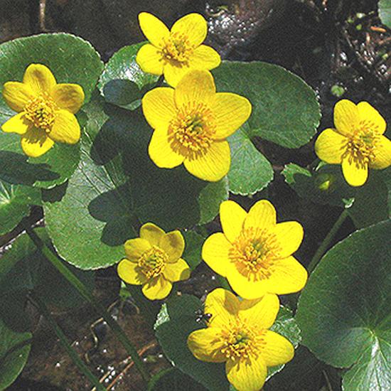 Foto 27 - flor de todos los meses