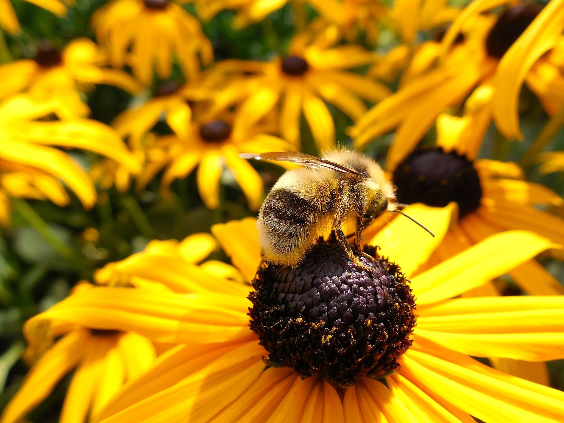 abeja sobre una flor
