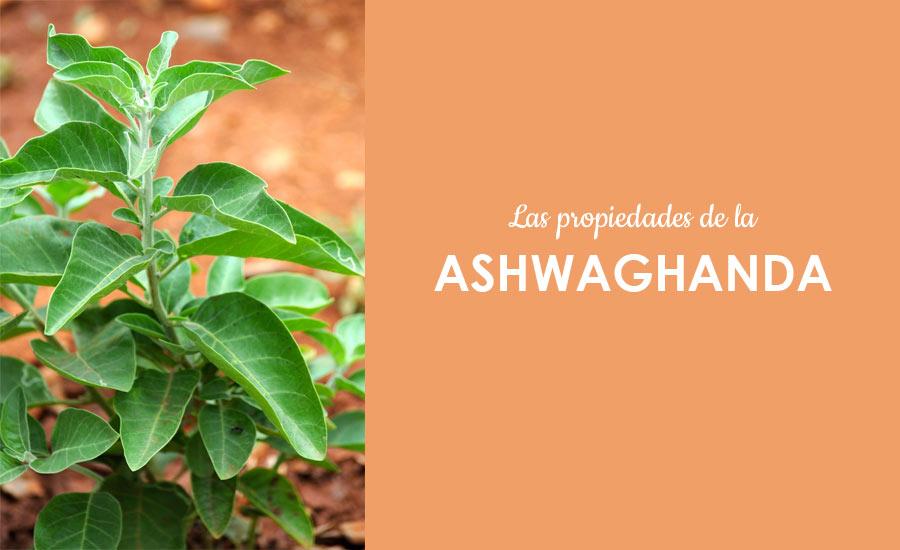 planta de ashwaganda