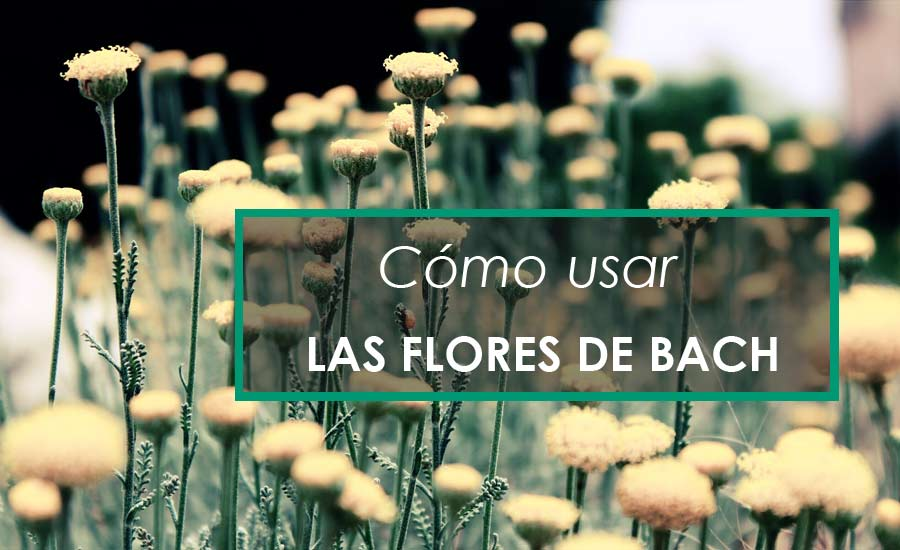 Como usar las flores de bach
