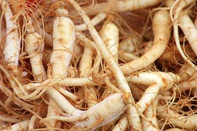 raíces de ginseng