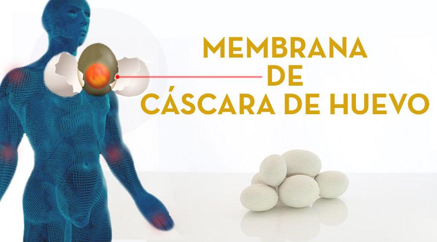 Membrana de cáscara de huevo, aporte de colágeno